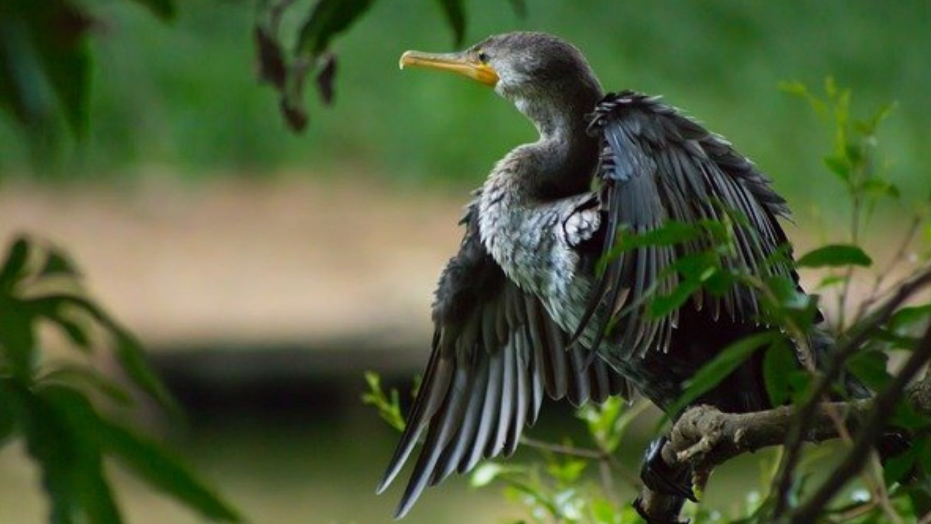 entreprise anti pigeons