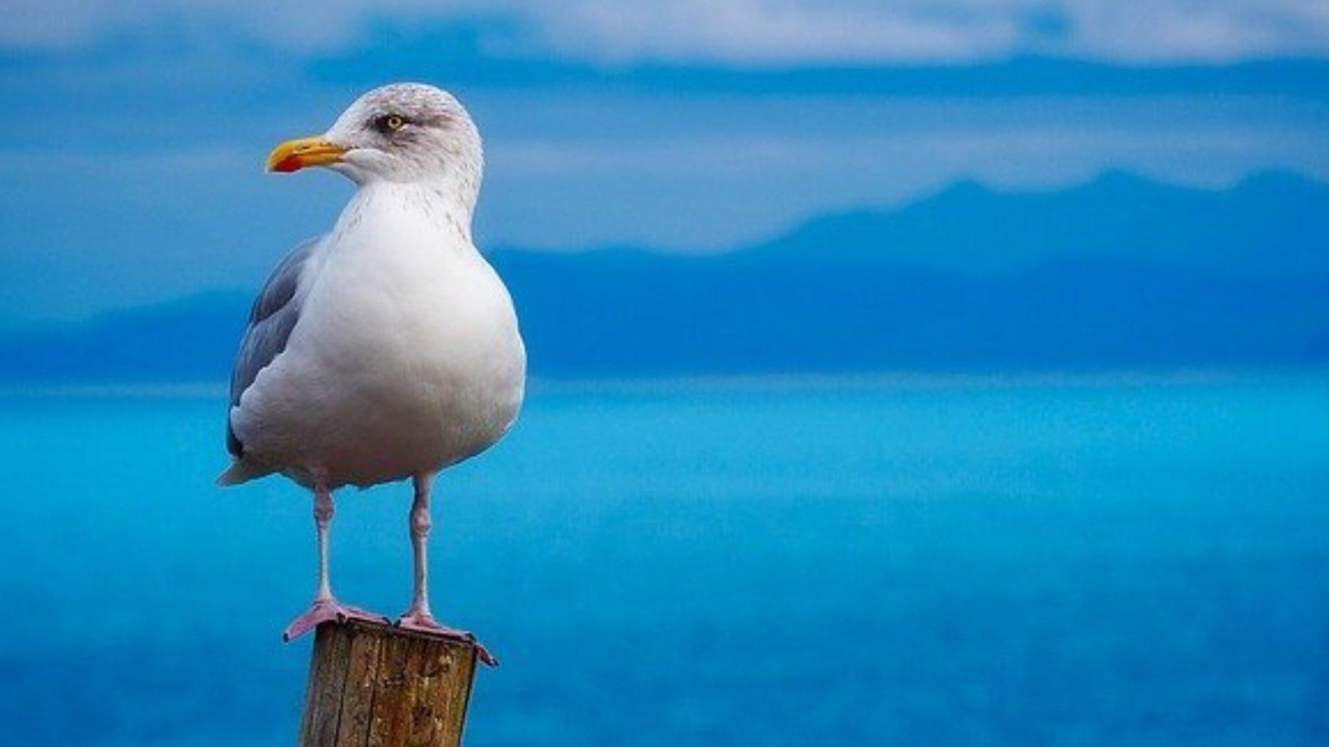intervention contre les pigeons